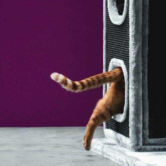 Kloremøbel Pet Rebels Cityview 195cm De Luxe Grey