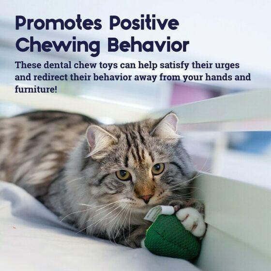 Petstages Lil 'Avocato Dental Health Cat Chew leke